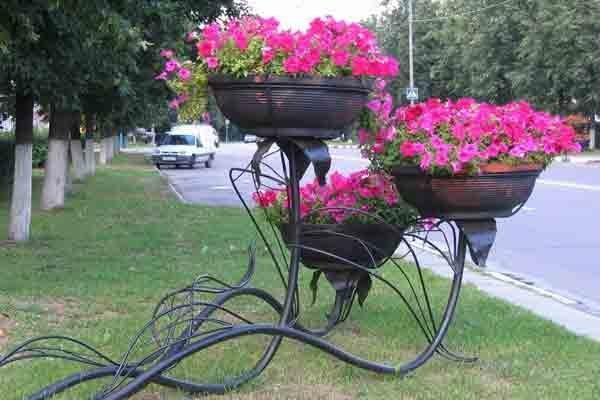 приобретение масел цветы для уличных вазонов оформить загранпаспорт