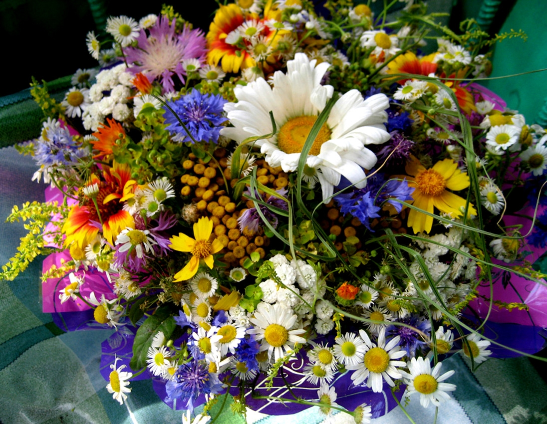 Картинки букет полевых цветов