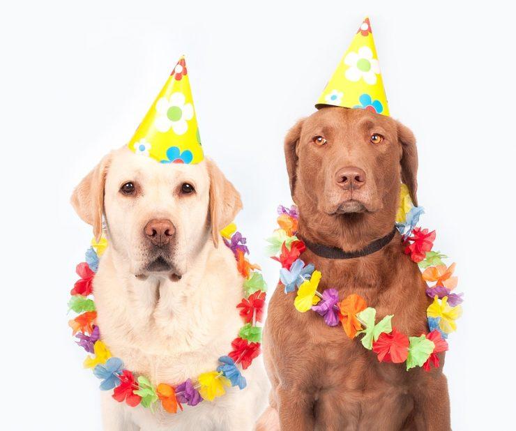 Топ-10 необычных объявлений о продаже собак на Авито