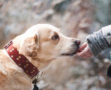 В Новокузнецке пройдет благотворительная фотосессия с собаками