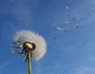 Днем в Новокузнецке будет тепло и ветрено