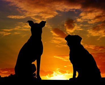 Новокузнечанин облил свою собаку керосином и поджег ее