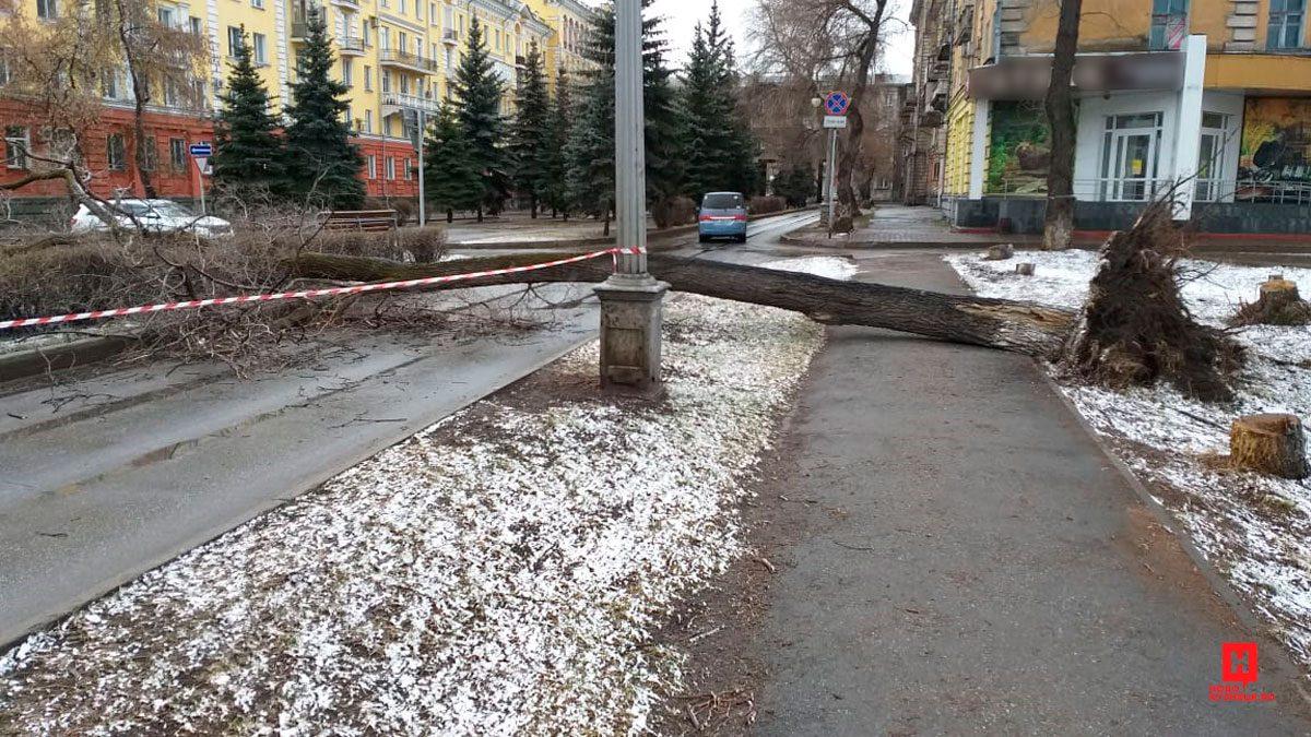 В Новокузнецке штормовой ветер сломал дерево 18 апреля 2019 г